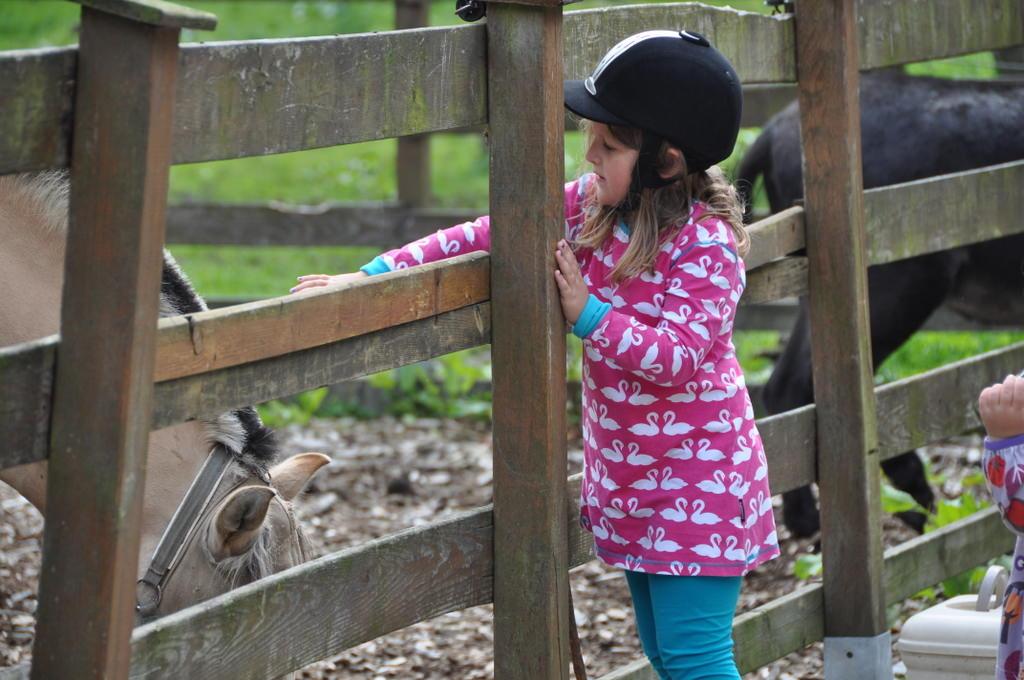 pferde kinder
