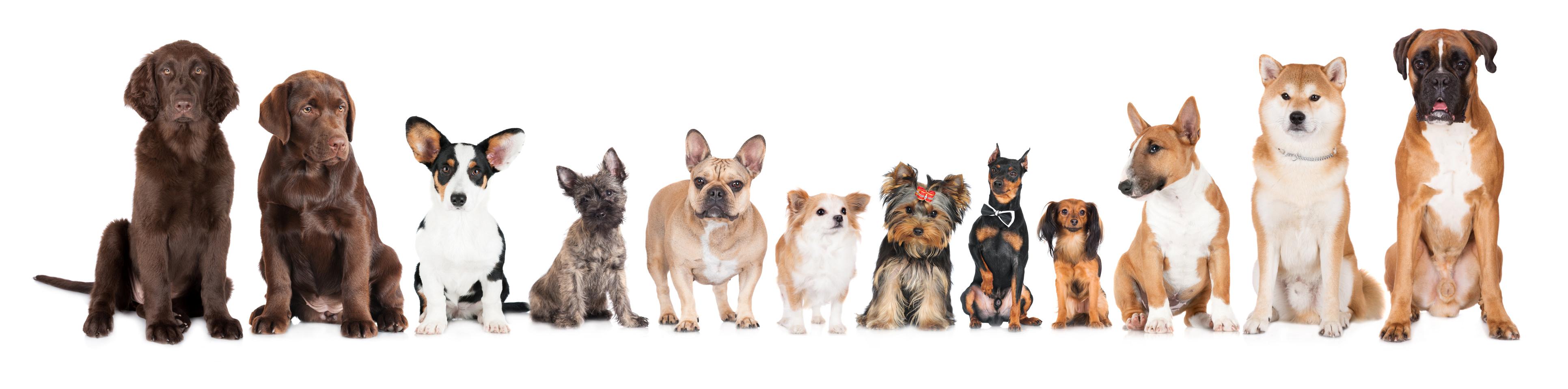 Best Big Dog Breeds For Families