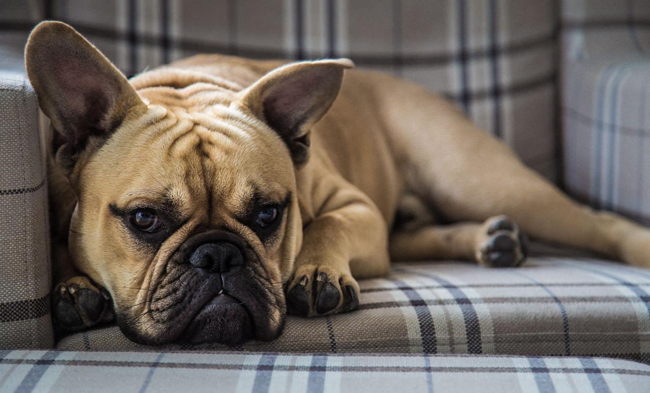 hunde dna test was steckt in meinem hund nenalisi danielas mami familien blog. Black Bedroom Furniture Sets. Home Design Ideas