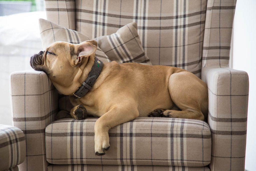 bully schläft auf Sessel