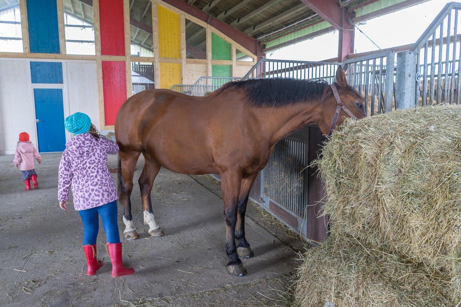 Pferde urlaub Hof köhne Landreise