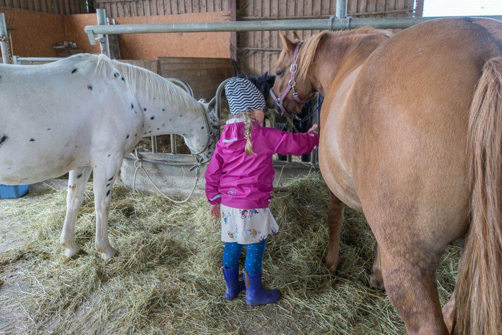 pferde putzen Hof köhne