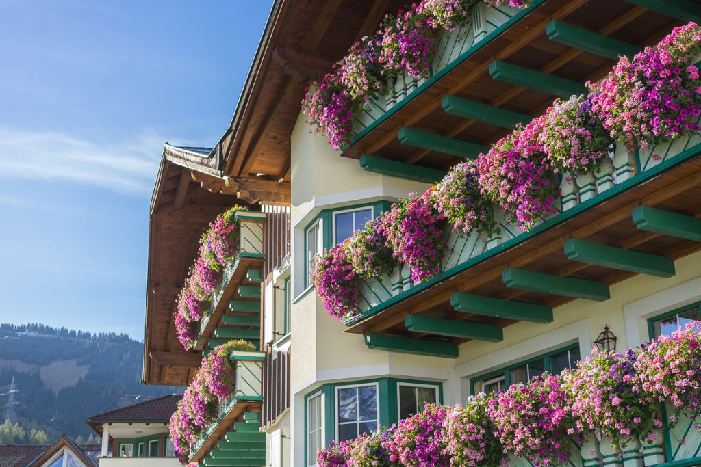 alpenrose lermoos blumen