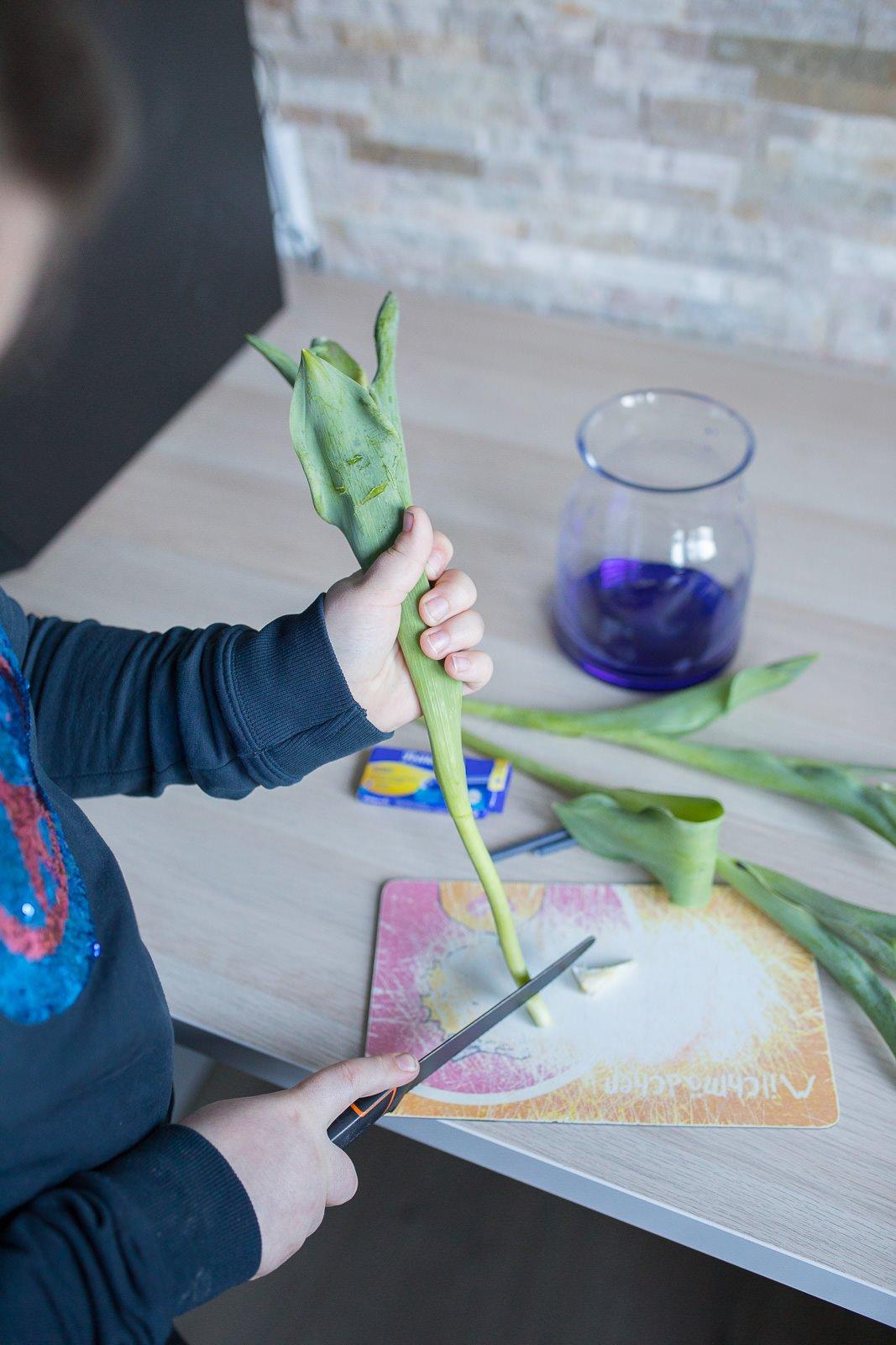 Nena´s DIY: Blumen färben! Ein tolles Experiment für Kinder.