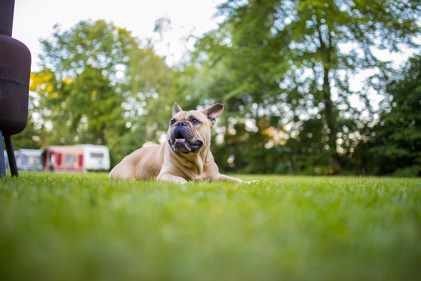 hunde erlaubt farmcamps