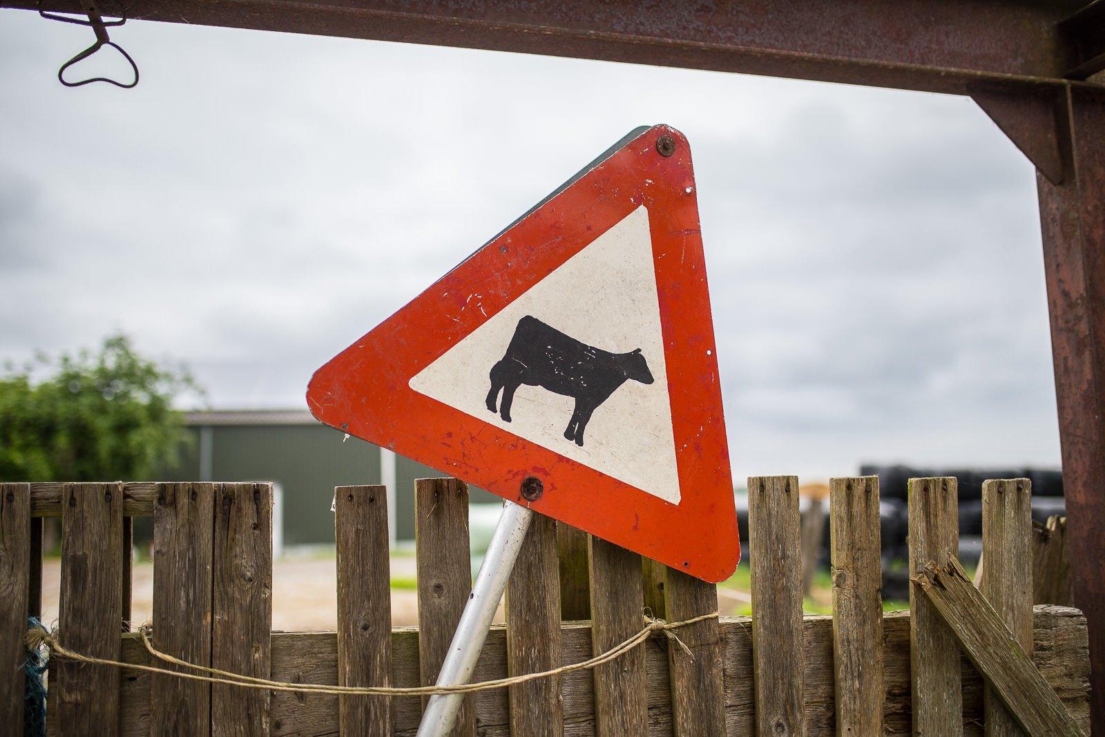 farmcamps de bosrand kühe