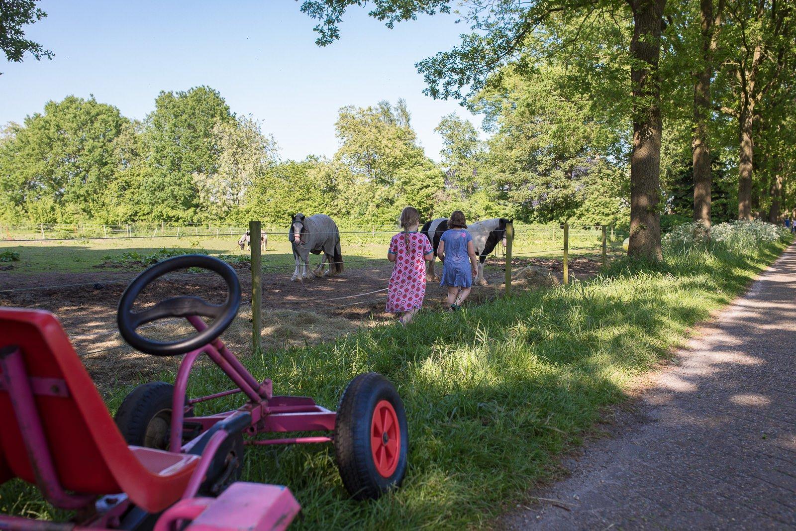 pferde Farmcamp de bosrand