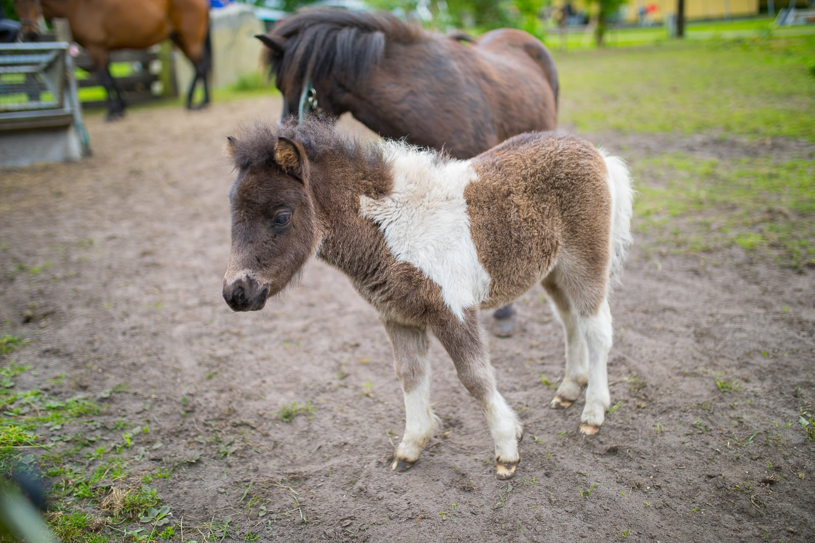 farm camp baby pony