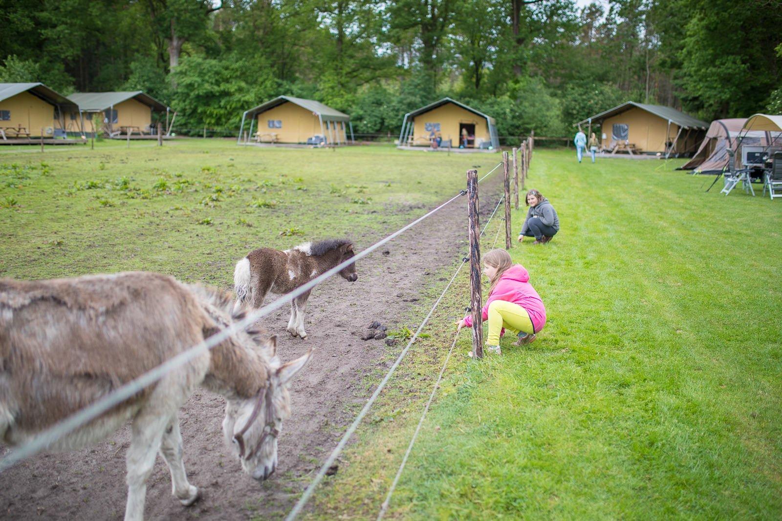 Zelturlaub mit Kindern farmcamps