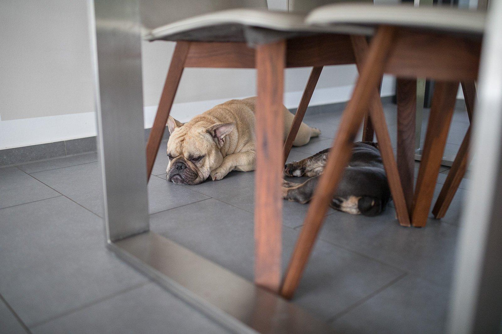 Hunde allein zuhause kamera