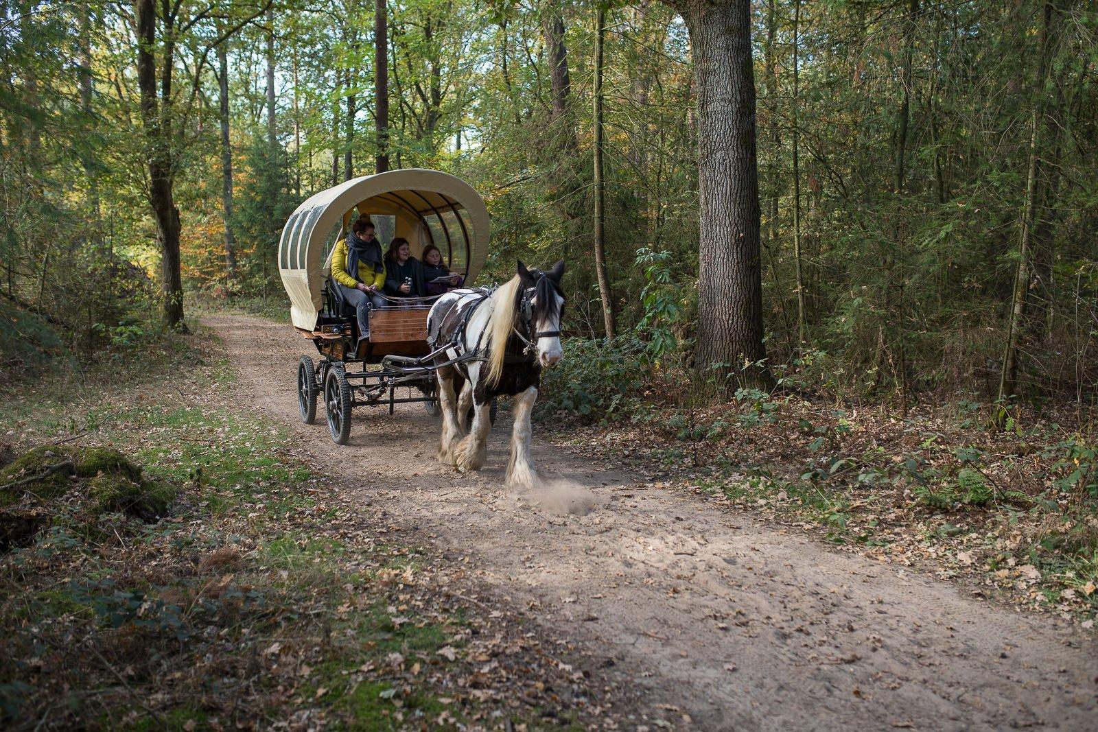 Huifkarcentrum Bergh pferde kutschen