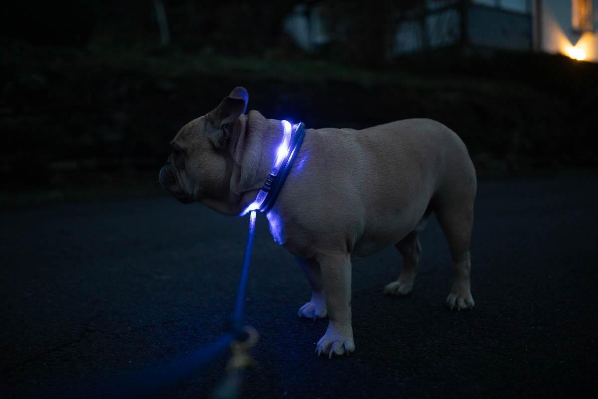 halsband leuchtet