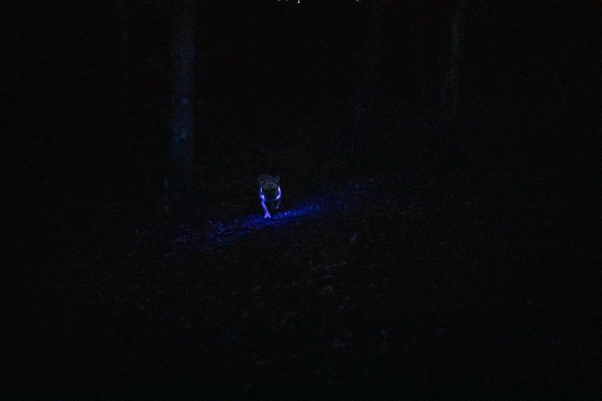 hundehalsband leuchtend