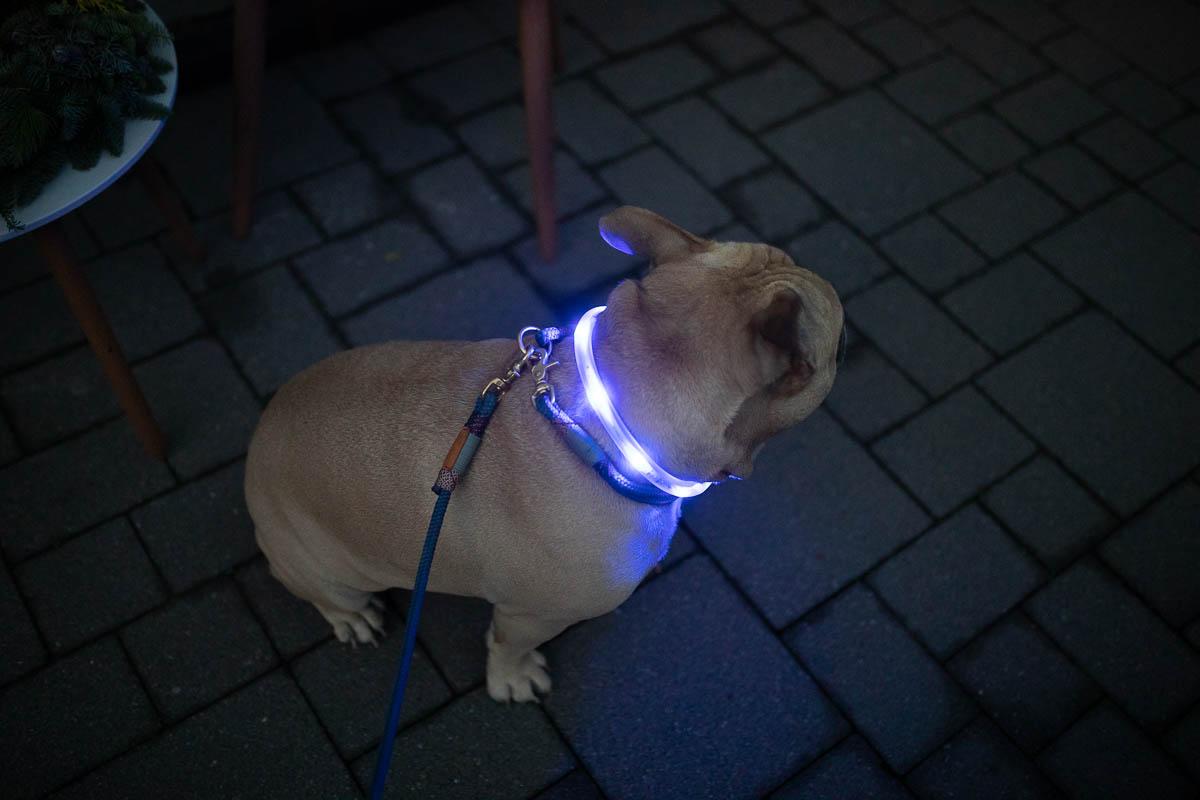 Tierarzt24.de leuchtendes Halsband