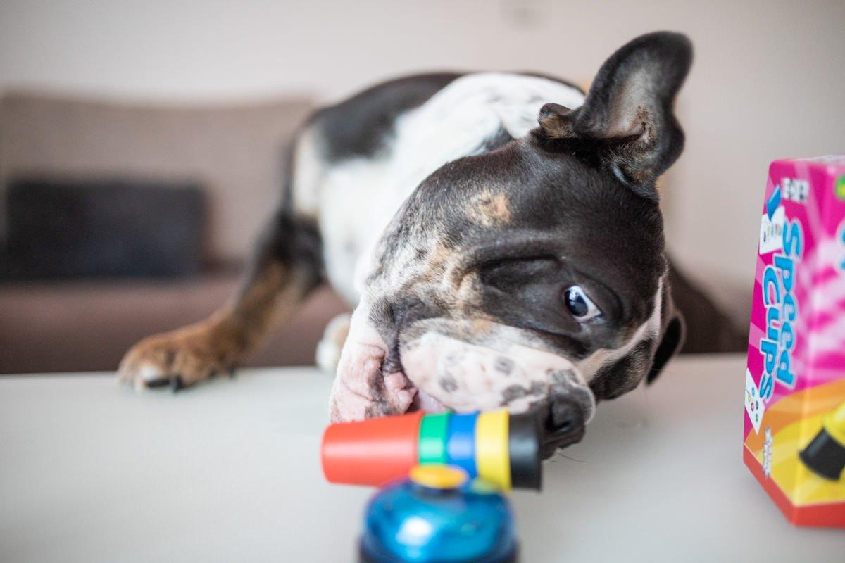 super cups mit hunden spielen