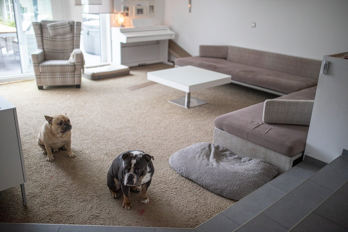 Wohnzimmer renovieren Teppich raus